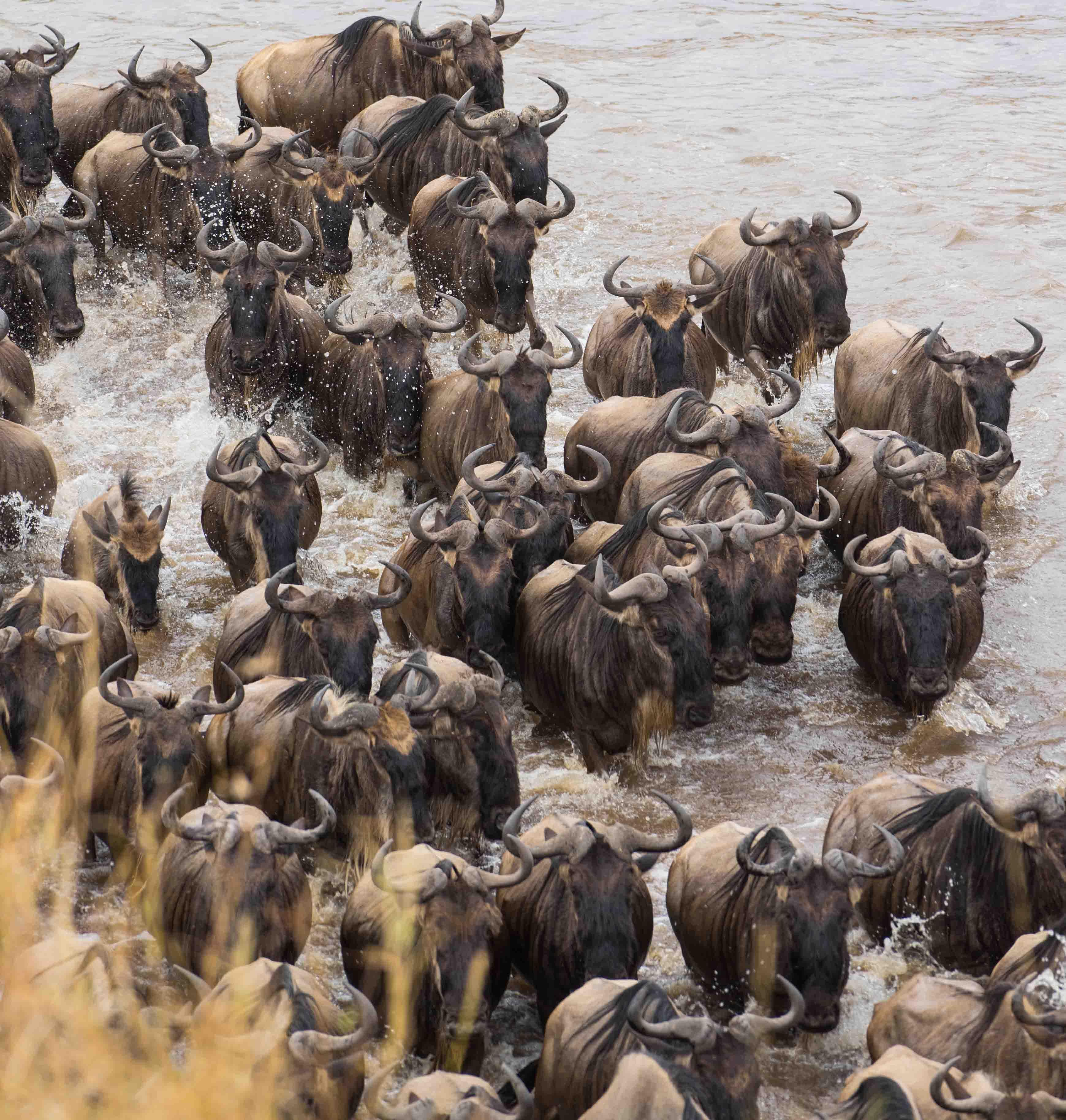 grote trek Tanzania