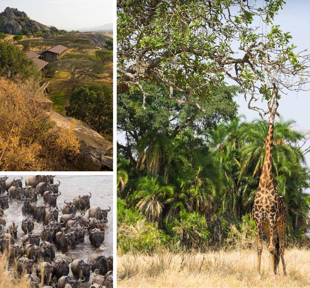 serengeti-tanzania