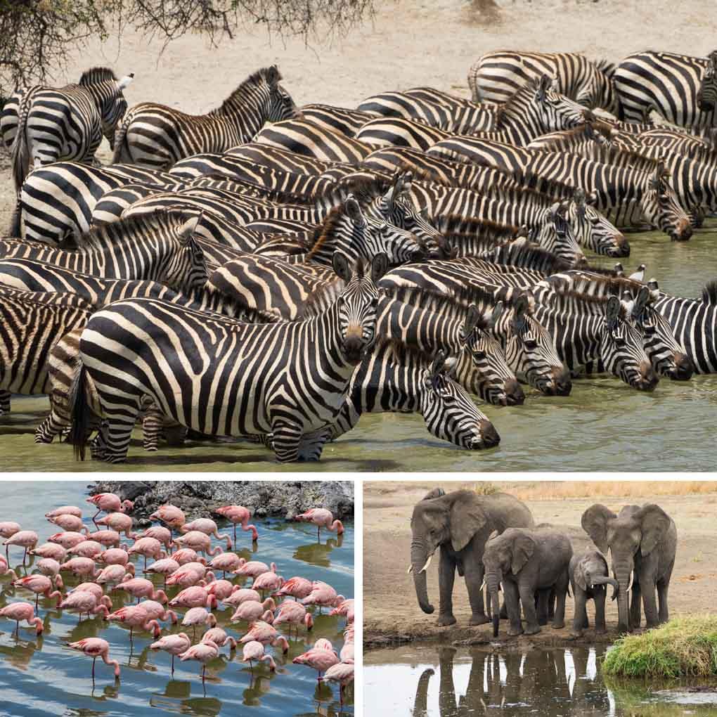 tanzania dieren