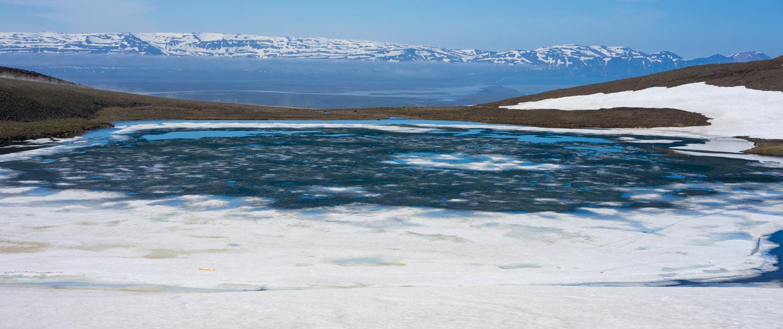 puffins-ijsland