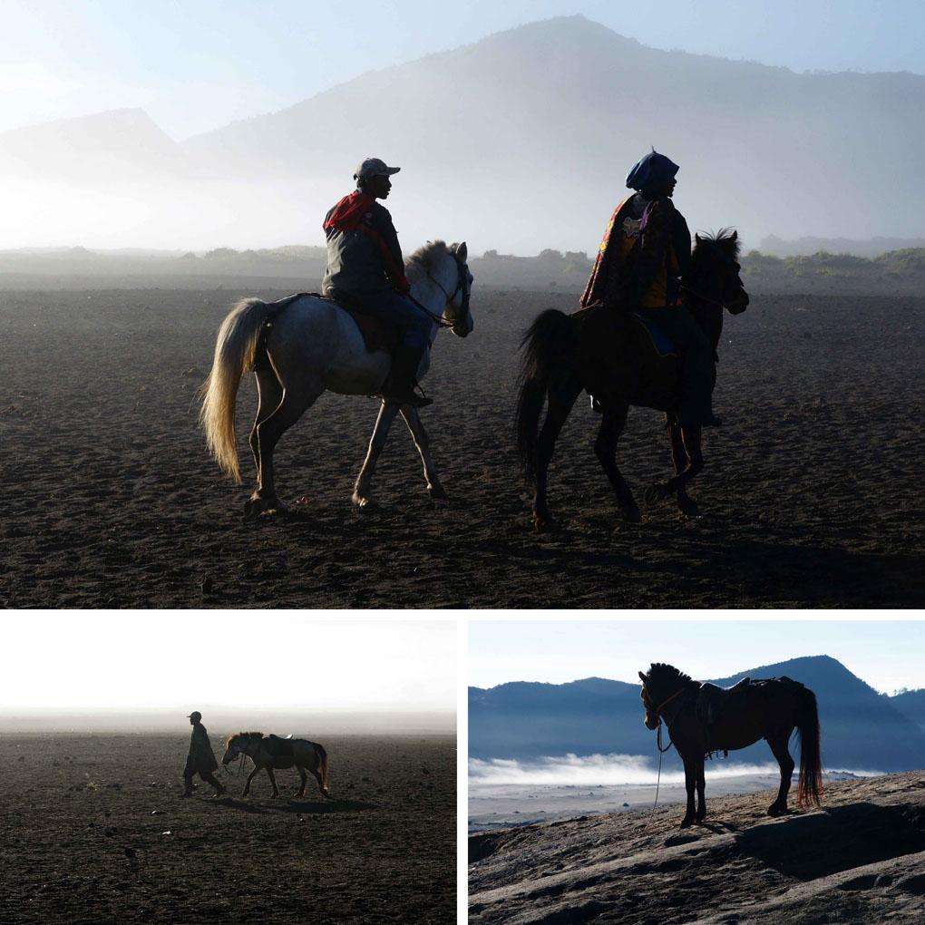 Bromo paarden