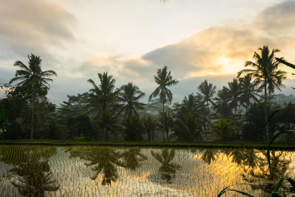 Natuur Bali