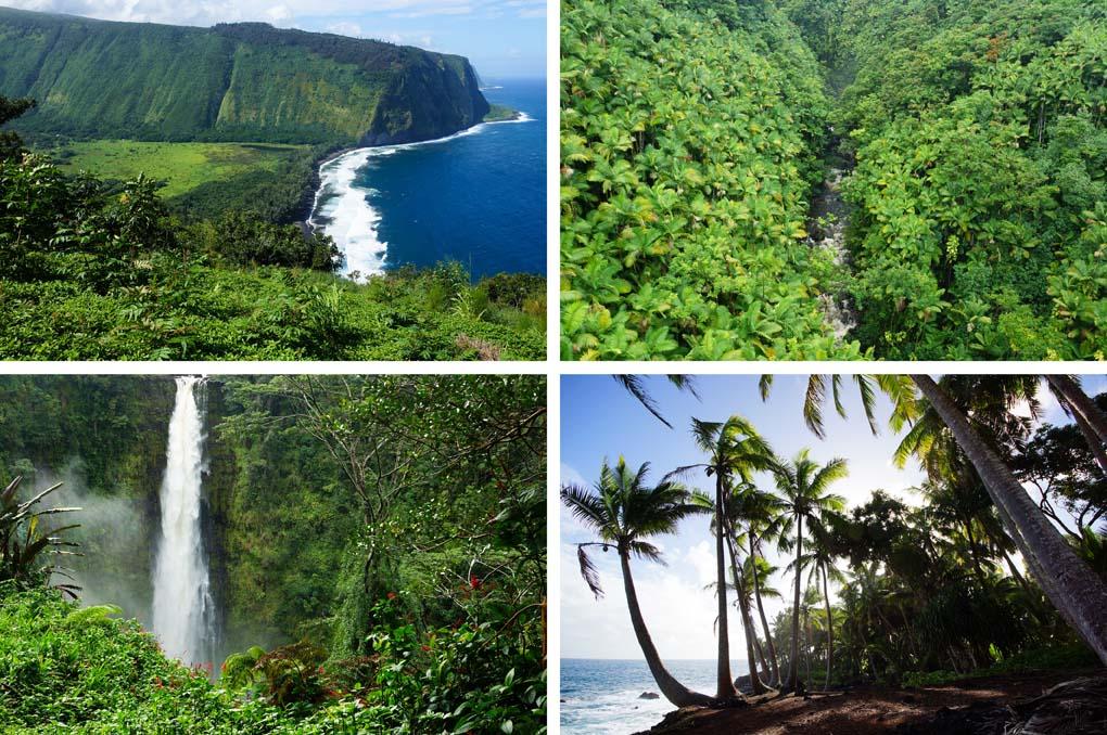 Natuur The Big Island