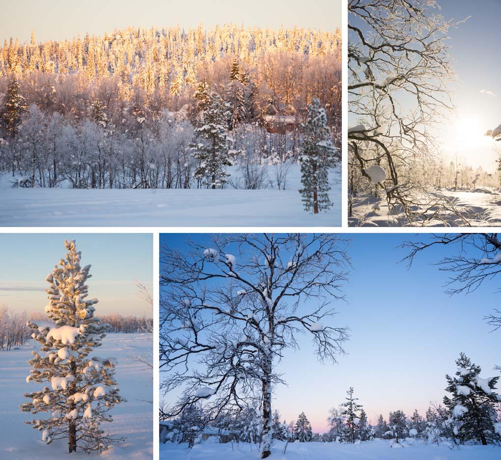 Zonsopgang Lapland