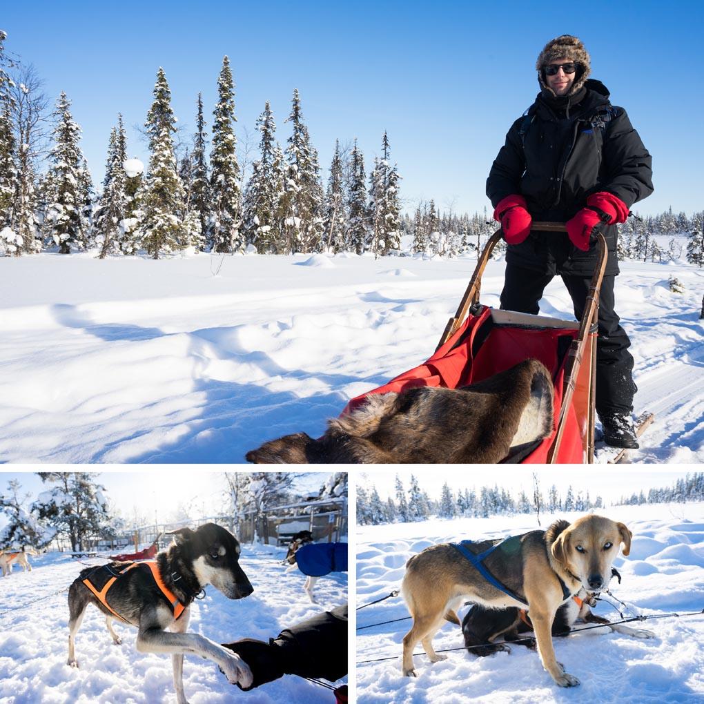 huskytocht Lapland