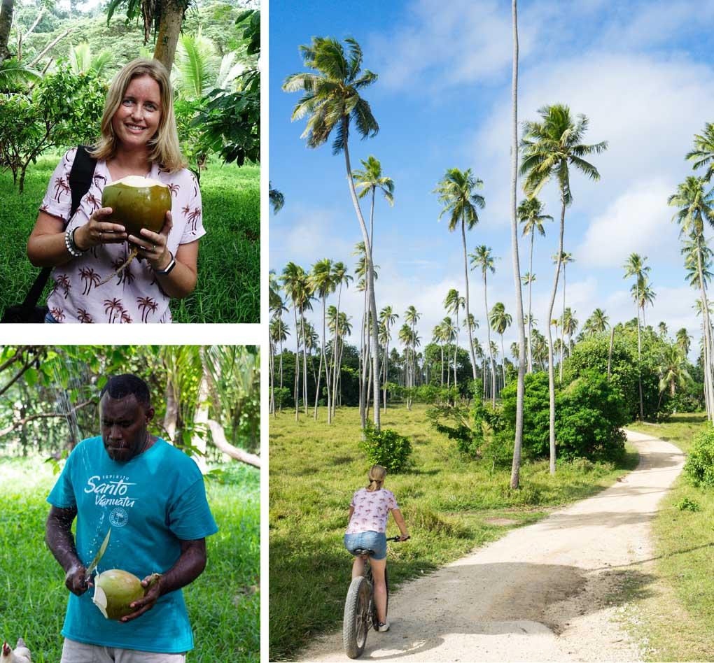 plantage Aore Island