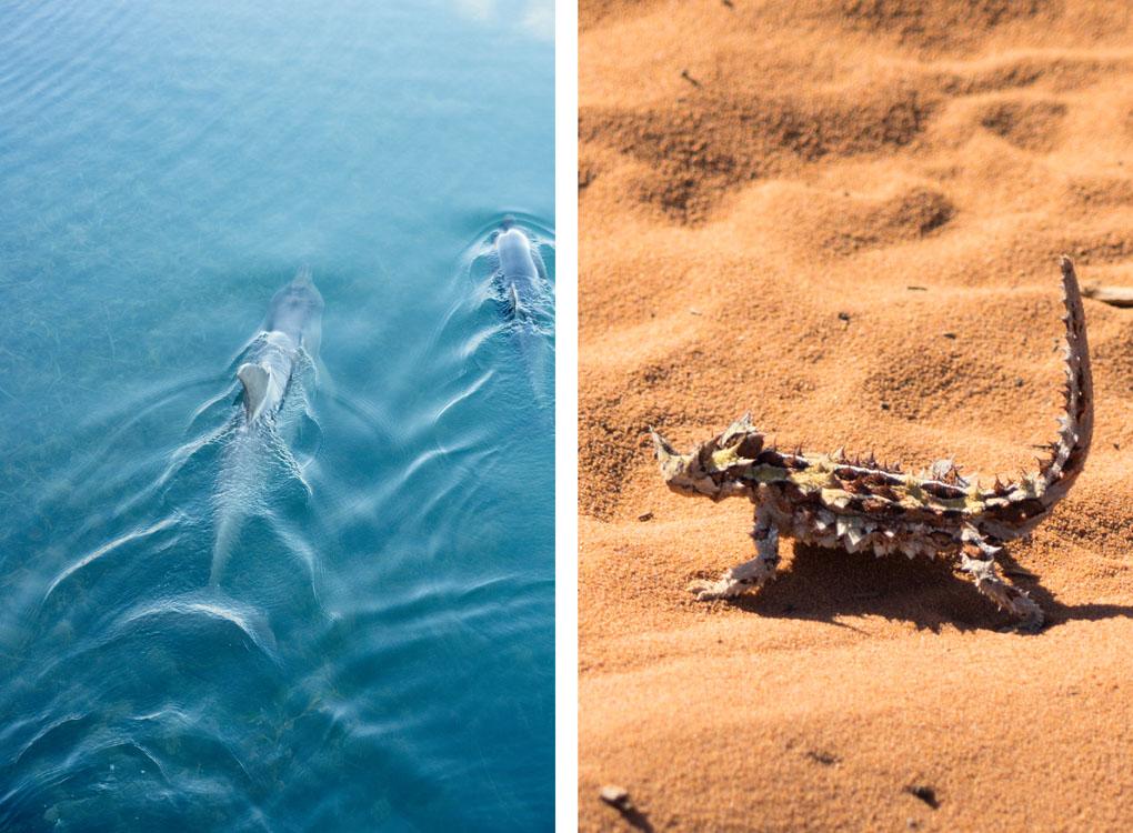 Shark Bay Australië