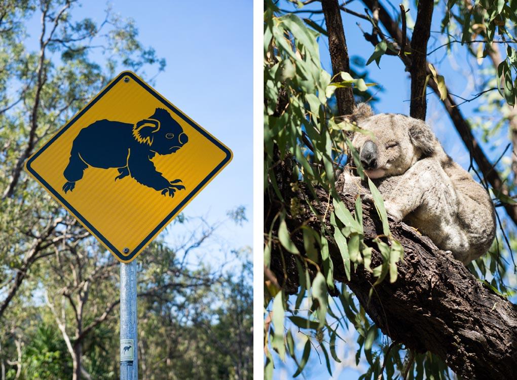 verkeersbord koala